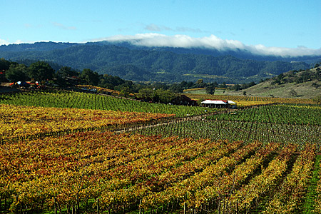 Oakville District, Napa Valley