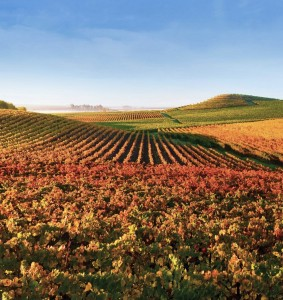 Bouchaine Winery offers extensive virtual visits with wine maker face time, for a fee.
