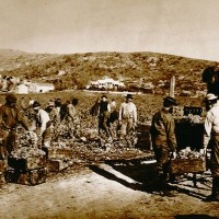 19th century photo of workers planting Zinfandel vines at Buena Vista. (Guild of Sommeliers.)