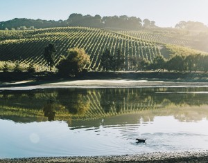 Cline's Sonoma Coast vineyards are Certified California Sustainable.