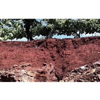 "The iron-rich red soil (""Terra Rossa"" of Australia's Coonawarra region forms a nurturing environment for Cabernet Sauvignon vines."