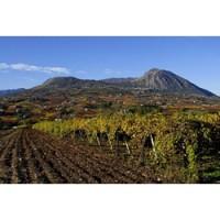 Falanghina del Sannio vineyard scene from Gambero Rosso.