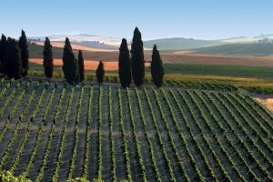 A scenic Sherry vineyard from Vinos de Jerez.