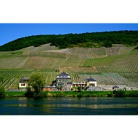Dr. Loosen's beautiful winery is on the bank of the Mosel, with his hillside vineyards rising above.