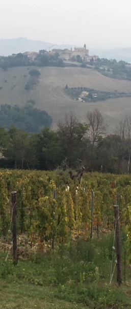 Officina del Sole vineyard, with the town of Montegiorgio in the background.