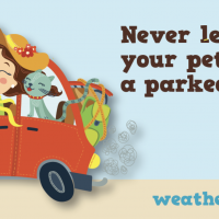 Never leave your pets in a parked car