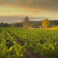 Ramey Wine Cellars, Westside Farms vineyard, Russian River Valley