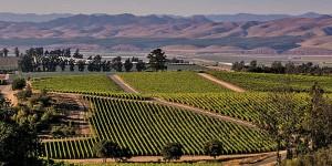 A scenic vineyard view in California's Santa Maria Valley.