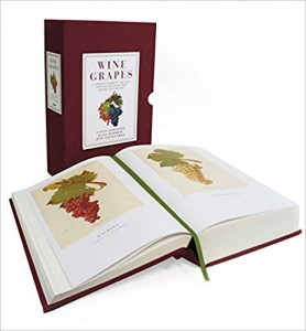 Wine Grapes: A Complete Guide