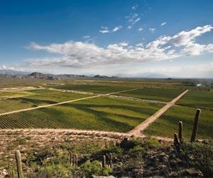 The vast landscape of Cafayate. (©Wines of Argentina)