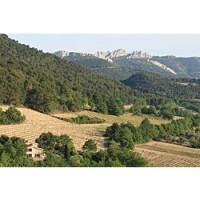 The beautiful, lacy peaks of the Dentelles de Montmirail mark the Côtes-du-Rhône,
