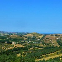 Montepulciano vineyards in Abruzzo.