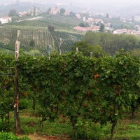 The Langhe Valley in the Piedmont region. PHOTO: Terry Duarte.