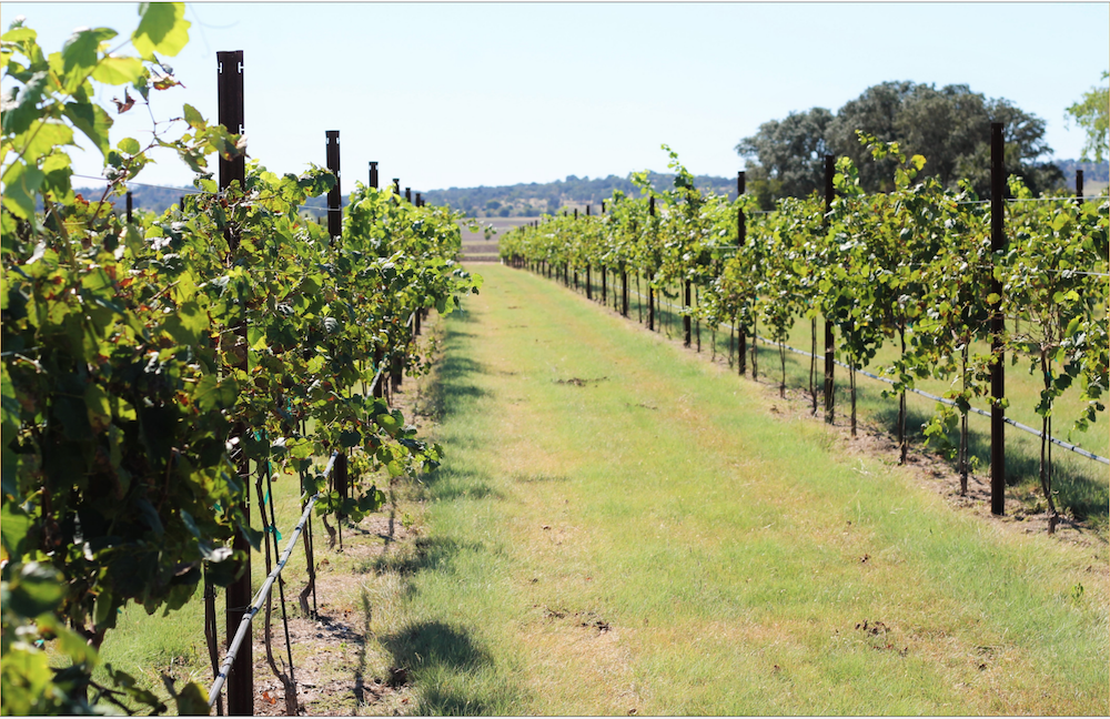 The vineyard of Wedding Oak. (website photo)